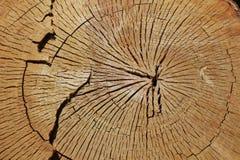 Corte la textura del anillo del tronco de árbol foto de archivo