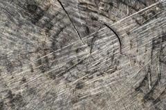 Corte la textura del tronco de ?rbol fotos de archivo