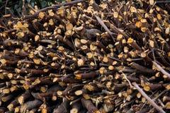 Corte las ramas de árbol de la madera Fotos de archivo libres de regalías