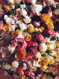 corte las rosas imágenes de archivo libres de regalías