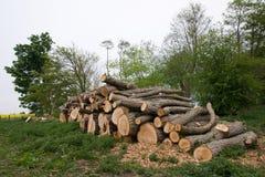 Corte los árboles Foto de archivo libre de regalías