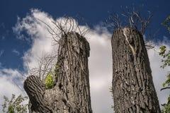 Corte los árboles Imagen de archivo libre de regalías