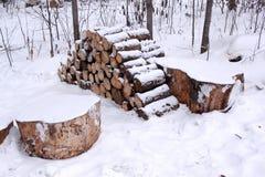 Corte los árboles de pino derribados en el bosque del invierno Imagen de archivo