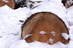Corte los árboles de pino derribados en el bosque nevoso del invierno Fotografía de archivo libre de regalías