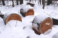 Corte los árboles de pino derribados en la tala de árboles hermosa del bosque del invierno Fotografía de archivo