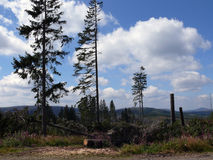 Corte los árboles en bosque bohemio en República Checa Imagen de archivo