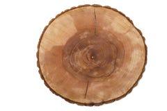 Corte los anillos de crecimiento del árbol Imagen de archivo