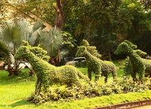 Corte los arbustos del caballo en parque del asiático de Vietnam foto de archivo libre de regalías