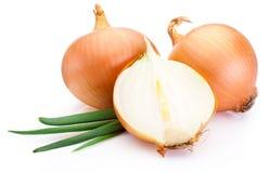 Corte los bulbos frescos de la cebolla en el fondo blanco Imagen de archivo libre de regalías