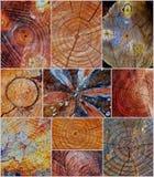 Corte los tocones de árbol Imagen de archivo
