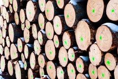 Corte los troncos de árbol Imágenes de archivo libres de regalías