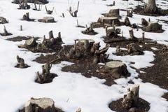 Corte los troncos de árbol en una nieve archivada Imágenes de archivo libres de regalías
