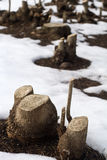 Corte los troncos de árbol en una nieve archivada Imagenes de archivo