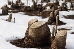 Corte los troncos de árbol en una nieve archivada Fotos de archivo