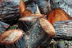 Corte a madeira Imagem de Stock Royalty Free