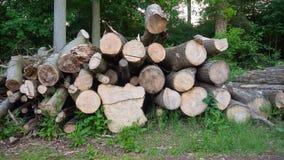 Corte a madeira na floresta Fotografia de Stock Royalty Free