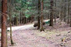 Corte a madeira na floresta Fotos de Stock