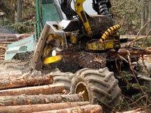 Corte mecánico de árboles en un bosque Imagen de archivo libre de regalías