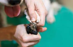Corte o cão das garras, tabela verde Imagens de Stock Royalty Free
