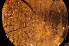 Corte o log que mostra anéis e quebras Contrata o corte do seção transversal da árvore que mostra anéis de árvore dos anéis de cr Imagem de Stock Royalty Free