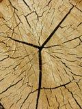 Corte o registro, textura do fundo do woodgrain Fotografia de Stock