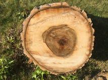Corte o tronco de árvore Foto de Stock Royalty Free