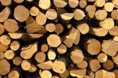 Corte os cotoes redondos da árvore requisitados no grande grupo Fotografia de Stock Royalty Free