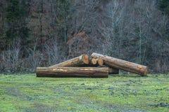 Corte os logs da árvore empilhados acima perto de uma estrada de floresta Fotografia de Stock
