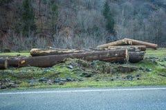 Corte os logs da árvore empilhados acima perto de uma estrada de floresta Fotos de Stock Royalty Free