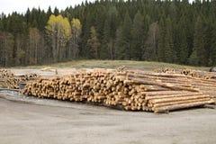 Corte os logs de madeira empilhados pela floresta Imagens de Stock