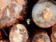 Corte os logs empilhados em uma extremidade da pilha sobre Imagens de Stock Royalty Free