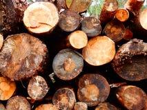 Corte os logs empilhados em uma extremidade da pilha sobre Foto de Stock Royalty Free