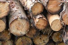 Corte os logs empilhados em uma extremidade da pilha sobre Fotografia de Stock Royalty Free
