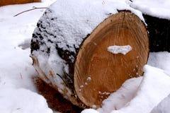 Corte pinheiros abatidos na floresta bloqueado pela neve do inverno Fotografia de Stock Royalty Free
