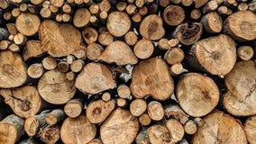 Corte ramos de árvore e empilhe-os fotos de stock royalty free