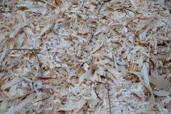 Corte recentemente as microplaquetas de madeira na floresta europeia imagem de stock