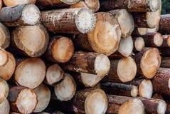 Corte recentemente os logs empilhados na floresta que registra, desflorestamento do pinho, questões meio-ambientais foto de stock