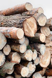 Corte recientemente el ‹del ‰ ÐºÑ del ‰ Ñ del ² Ñ del ³ Ð?Ð del ‰ Ð de los registros Ñ del pino del árbol Foto de archivo libre de regalías