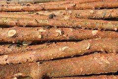 Corte recientemente los registros del árbol de pino fotos de archivo