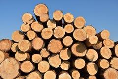 Corte recientemente los registros del árbol de pino foto de archivo libre de regalías