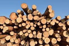 Corte recientemente los registros del árbol de pino foto de archivo