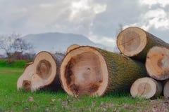 Corte recientemente los troncos de madera con el fondo nublado imagenes de archivo