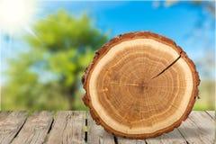 Corte redondo del árbol en fondo de la naturaleza Imagenes de archivo