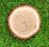 Corte redondo del árbol en fondo de la naturaleza Fotografía de archivo libre de regalías