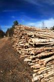 Corte registros na borda da floresta fotos de stock