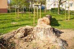 Corte a árvore Fotografia de Stock