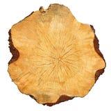 Corte seccionado transversalmente del árbol fotografía de archivo