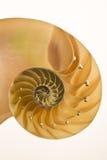 Corte seccional de un shell del nautilus Imagen de archivo libre de regalías
