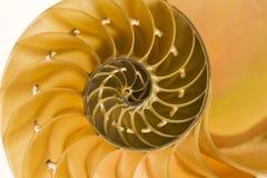 Corte secional de um escudo do nautilus Fotografia de Stock