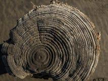 Corte seco natural bonito de uma árvore opinião superior do coto de madeira imagens de stock royalty free